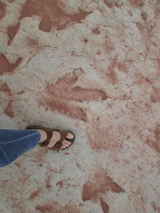 81 - dinosaur tracks