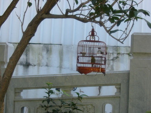 Birdcage in Tree
