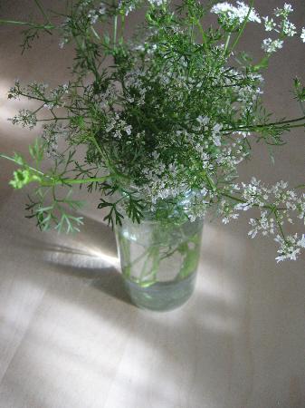 Cilantro_flowers